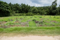 FAMU's Community Garden Grows Food and Community